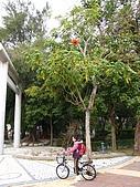 2009春節賞花樂:朴子藝術公園