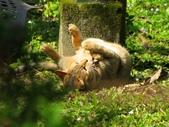 春遊台北植物園:野貓