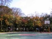 陽明山賞楓紅:藍球場楓紅