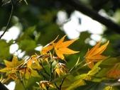 春花處處開:春楓