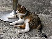 侯硐貓咪:貓咪