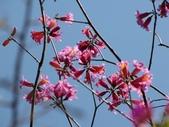 春遊台北植物園:風鈴木