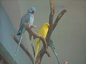 木柵動物園:鸚鵡