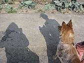 2009春節賞花樂:影子