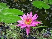 綠世界生態農場:香水蓮