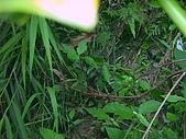 綠世界生態農場:蛇