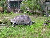 木柵動物園:烏龜