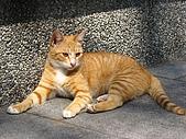 可愛的貓咪:貓咪