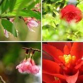春花處處開:春花開