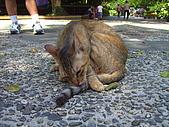 台北植物園的貓:貓咪