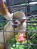 木柵動物園:金絲猴