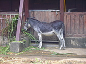 木柵動物園:馬