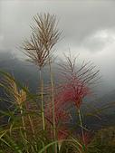 拉拉山之旅:芒草