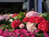 2013台北花卉展:繡球花