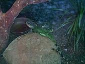 綠世界生態農場:蜥蜴