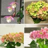 一些家花:家花