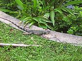 木柵動物園:蜥蜴