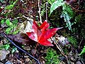 拉拉山之旅:楓葉