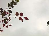 拉拉山之旅:紅葉