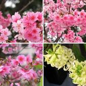 春暖花開:春暖花開