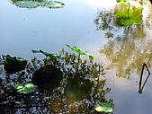 安康荷花開:安康荷花池