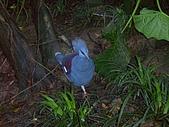 綠世界生態農場:皇冠鴿