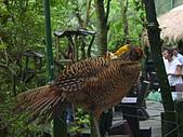 綠世界生態農場:金雞