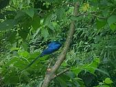 綠世界生態農場:鳥