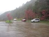 武陵櫻花:雪山登山口停車場