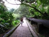 陽明春櫻:天母古道