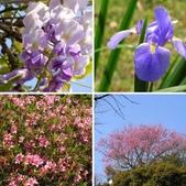 春遊台北植物園:春花開