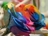 士林官邸玫瑰季:七彩玫瑰