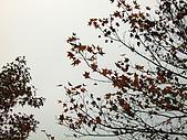 拉拉山之旅:楓紅