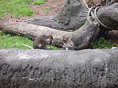 木柵動物園:猴子