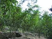 天母古道:竹林