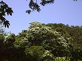 土城桐花+浴佛節:天氣很好