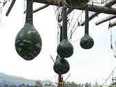 2006/8/19赤科山:赤科山09