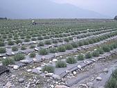 旅行系列2004/10/8(兆豐農場半日遊) :b1df