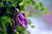 花:_DSC5262.jpg