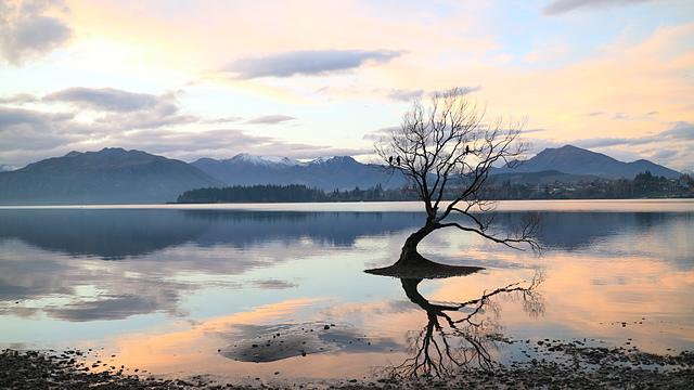That Wanaka Tree (25).JPG - Kiwi Memory