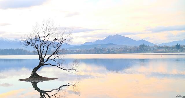 That Wanaka Tree (24).JPG - Kiwi Memory