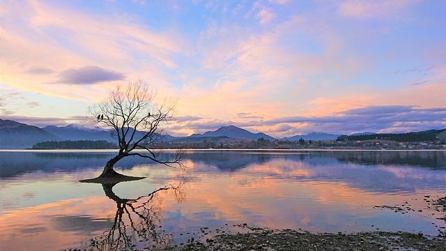 That Wanaka Tree (2).JPG - Kiwi Memory