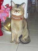 比比寶貝:阿比像隻假貓