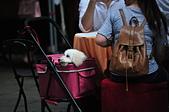 2020/05/31 寵物戶外購物節 @ 台北市信義區興雅路:DSC_6815.JPG