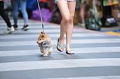 2020/05/31 寵物戶外購物節 @ 台北市信義區興雅路:DSC_6793.JPG