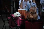 2020/05/31 寵物戶外購物節 @ 台北市信義區興雅路:DSC_6817.JPG