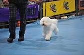 2020/07/12 南港世貿寵物展:DSC_7401.JPG