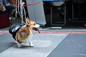 2020/05/31 寵物戶外購物節 @ 台北市信義區興雅路:DSC_6811.JPG