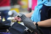 2020/07/12 南港世貿寵物展:DSC_7379.JPG