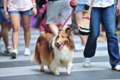 2020/05/31 寵物戶外購物節 @ 台北市信義區興雅路:DSC_6827.JPG